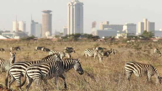 Nairobi National Park safari touring company Kenya